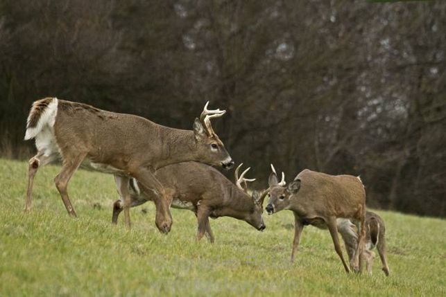 Czech republic st hubertus hunting tours to your hunting paradise